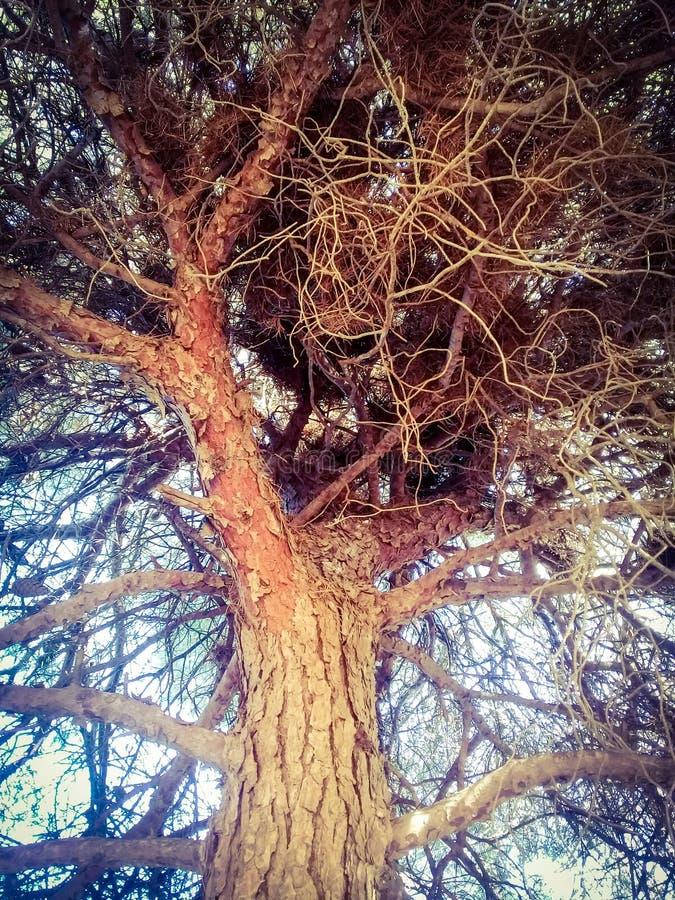 De zorguiteinden van de de winterboom royalty-vrije stock foto's