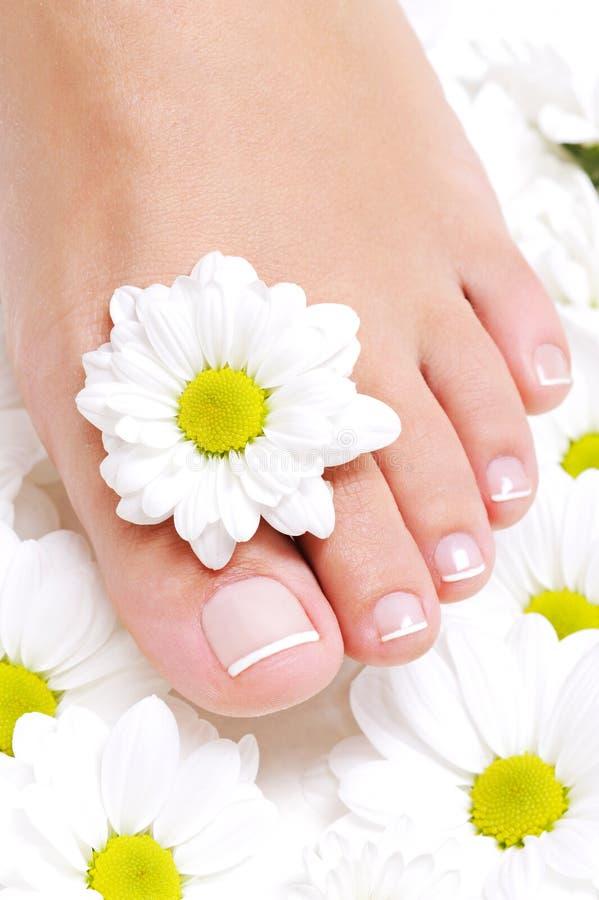 De zuivere vrouwelijke voet van de schoonheid stock foto's