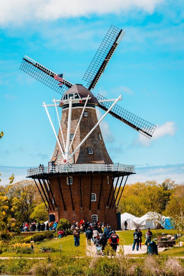 De Zwaan风车在荷兰密执安在郁金香时间 库存照片