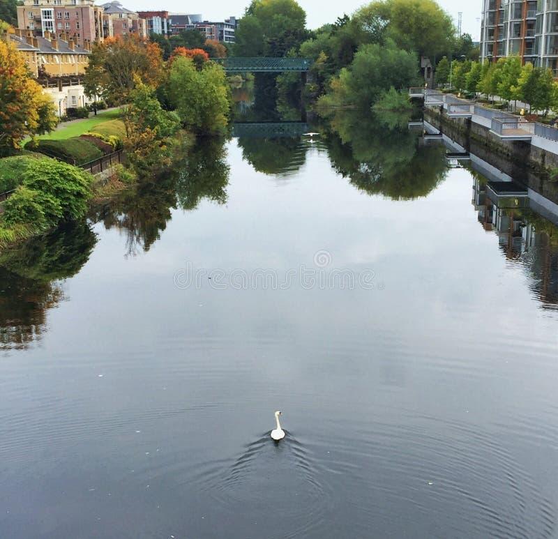 De Zwaan Ierland van rivierliffey royalty-vrije stock foto