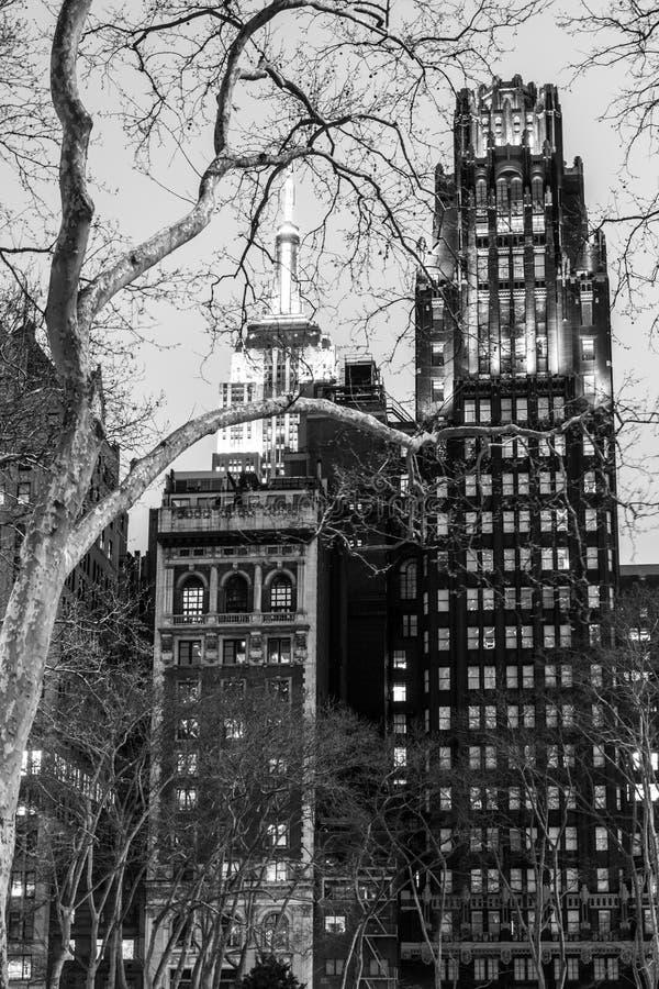 De zwart-witte bomen en bouw van de Imperiumstaat stock foto
