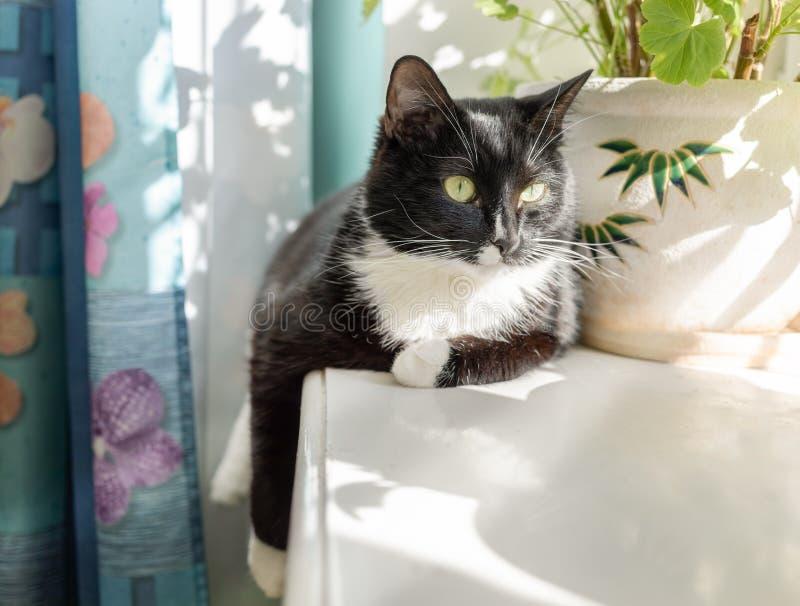De zwart-witte kat ligt op zonovergoten vensterbank royalty-vrije stock afbeelding