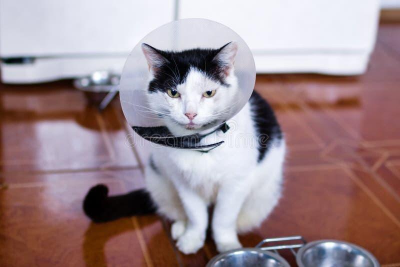 De zwart-witte kat met plastic medische kraag zit op een vloer van keuken dichtbij aan koelkast en kommen met kattenvoedsel stock afbeelding