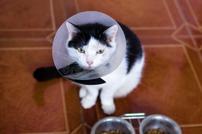 De zwart-witte kat met plastic medische kraag zit op een vloer van keuken dichtbij aan kommen met kattenvoedsel royalty-vrije stock fotografie