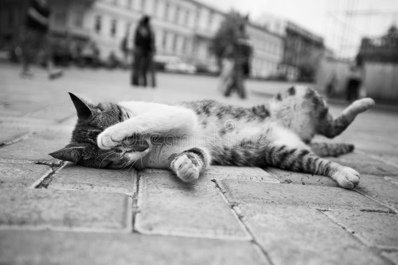 De zwart-witte kattenfoto die in de straat in diverse grappig liggen stelt stock afbeelding