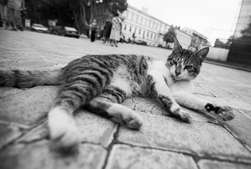 De zwart-witte kattenfoto die in de straat in diverse grappig liggen stelt royalty-vrije stock fotografie