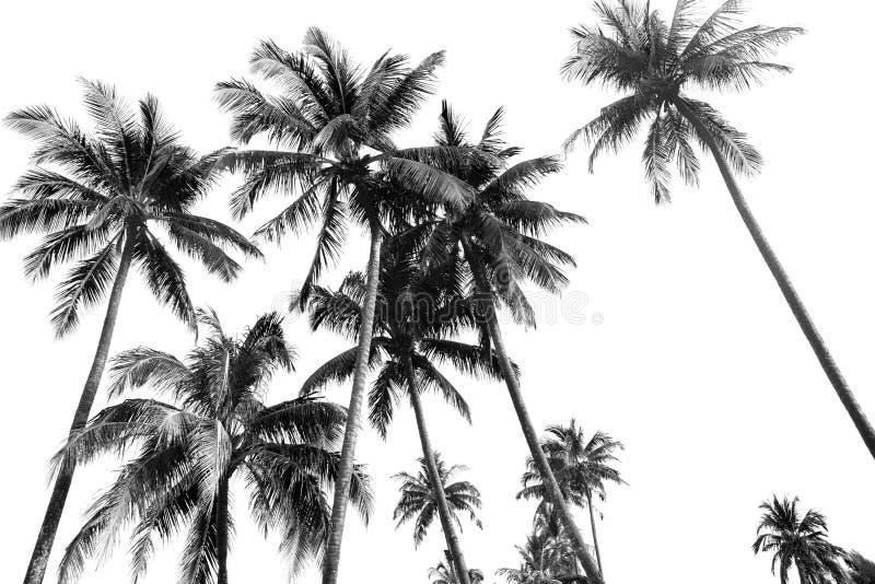 De zwart-witte palmen van de silhouetten tropische kokosnoot stock foto's