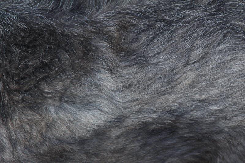 De zwart-witte textuur van het hondhaar royalty-vrije stock foto