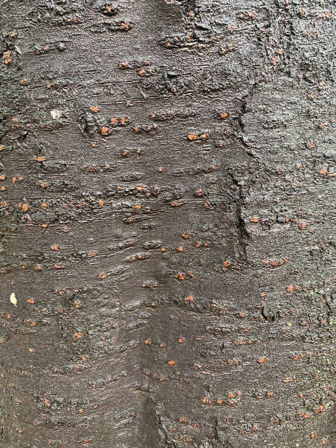 De zwarte achtergrond van de boomboomstam royalty-vrije stock foto