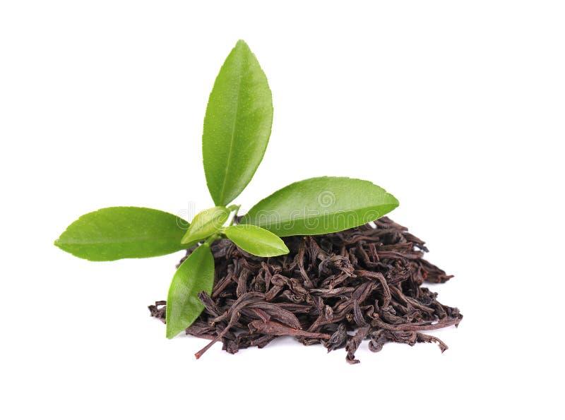 De zwarte die thee van Ceylon met zuurzak, op witte achtergrond wordt geïsoleerd royalty-vrije stock fotografie