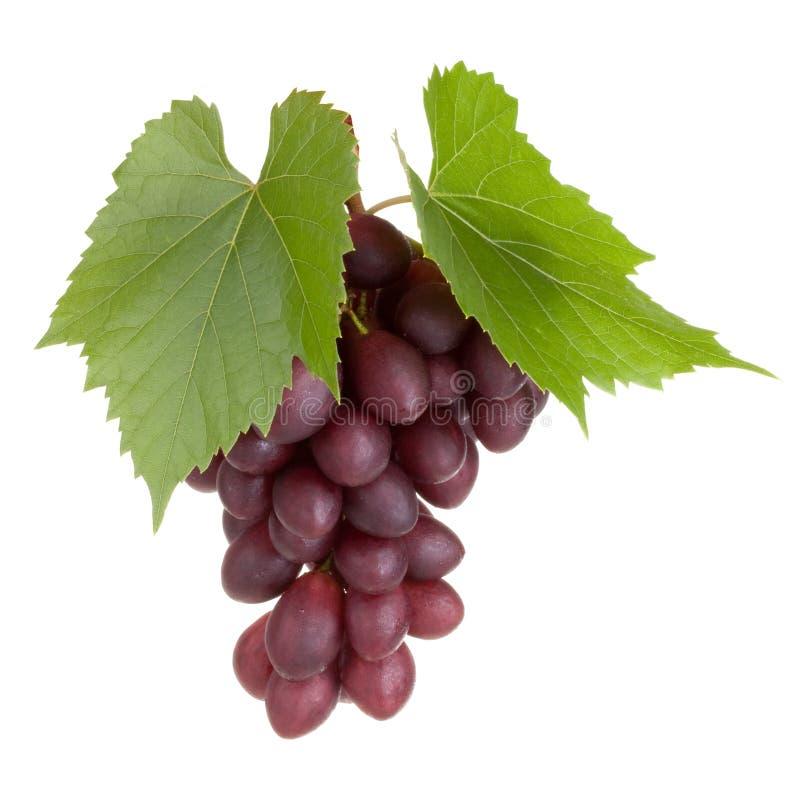 De zwarte druivenvruchten met doorbladeren stock afbeeldingen