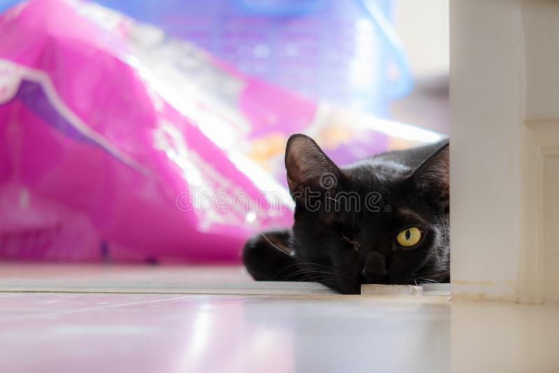 De zwarte eenogige kat ligt in de hoek van de kamer royalty-vrije stock afbeeldingen