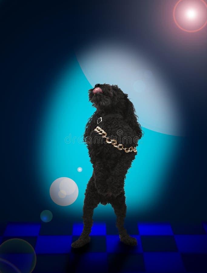 De dansende hond van de disomuziek royalty-vrije stock fotografie