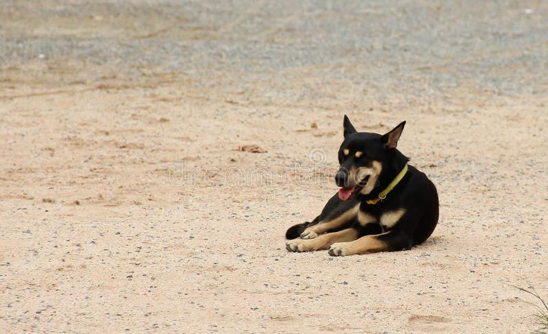 De zwarte hond wacht stock foto's