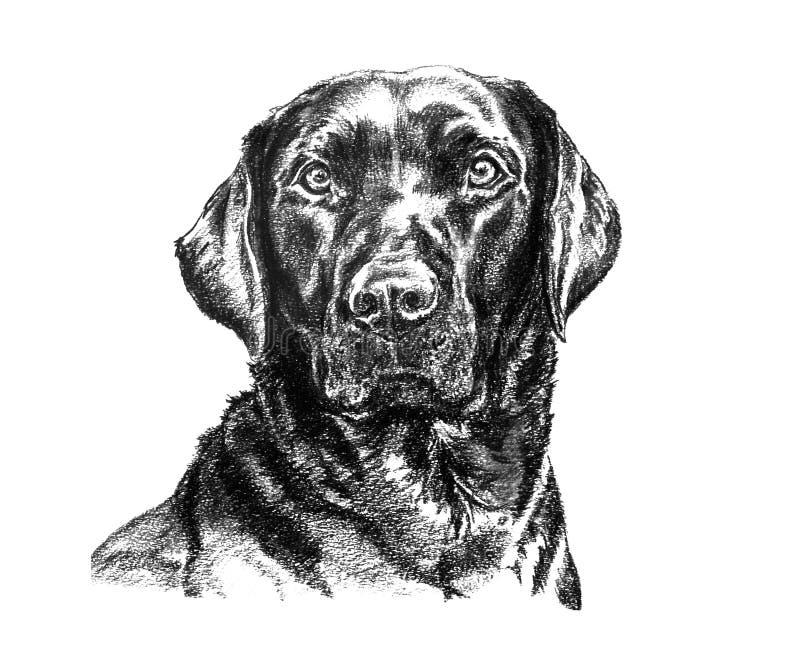 De zwarte illustratie van Labrador stock illustratie
