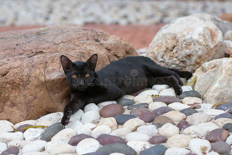 De zwarte kat neemt een rust stock afbeeldingen