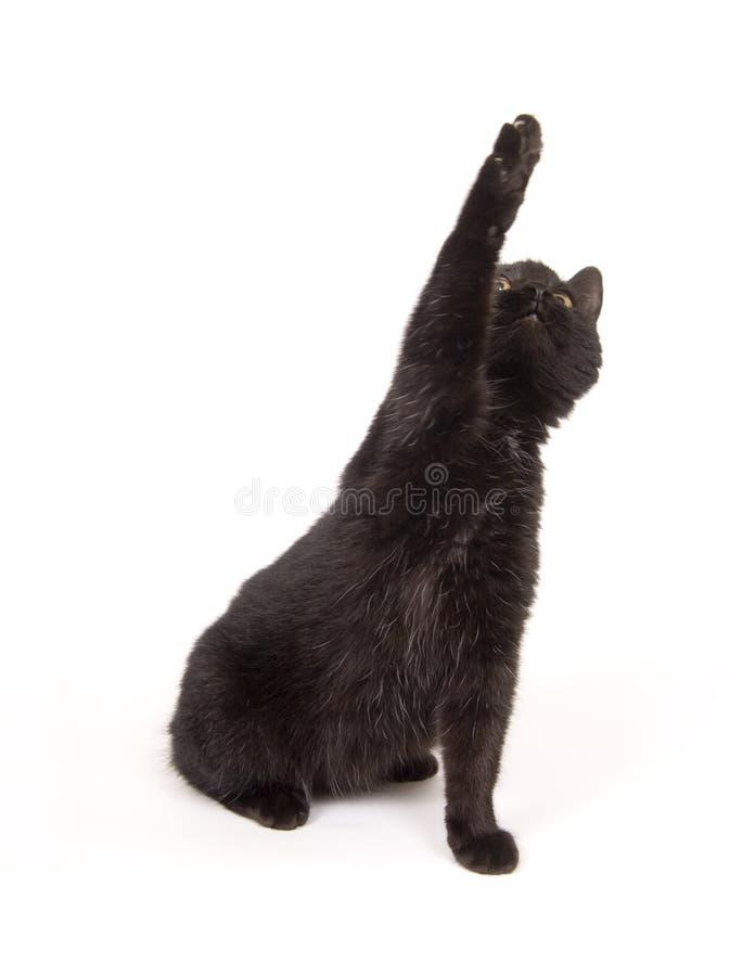 De zwarte kat slingert zijn poot terwijl het spelen royalty-vrije stock foto
