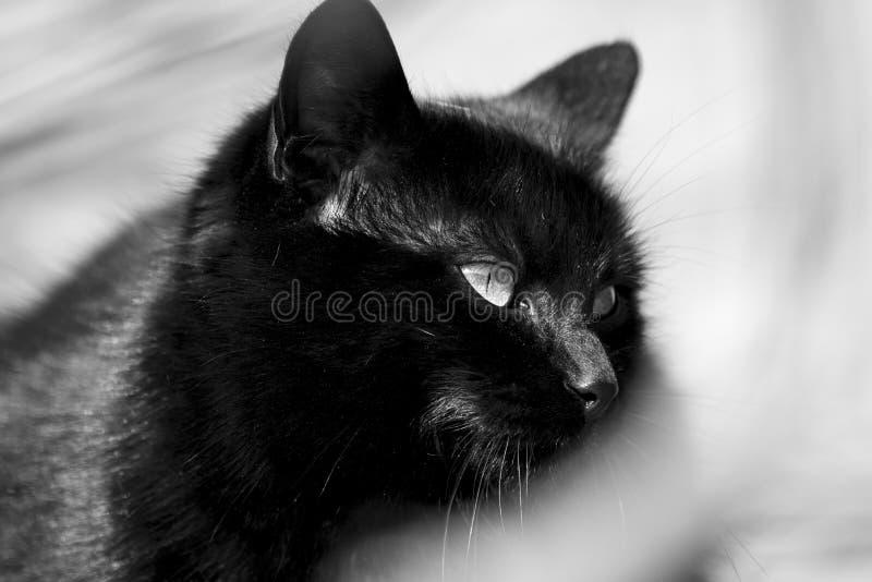 Download De Zwarte Kat Is Zo Mysterios Stock Afbeelding - Afbeelding bestaande uit omheining, halloween: 107700775