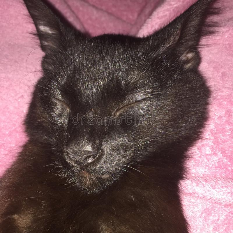 De zwarte katten zijn mooi stock foto's