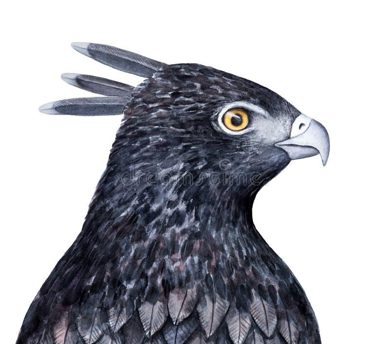 De zwarte kuif schetsmatige illustratie van de haviksadelaar stock illustratie