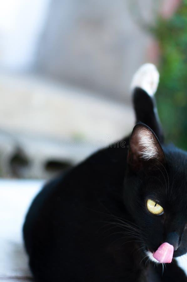 De zwarte leuke kat zit en likt zijn neus op omheining, Dierlijk portret Zwart katje royalty-vrije stock afbeeldingen