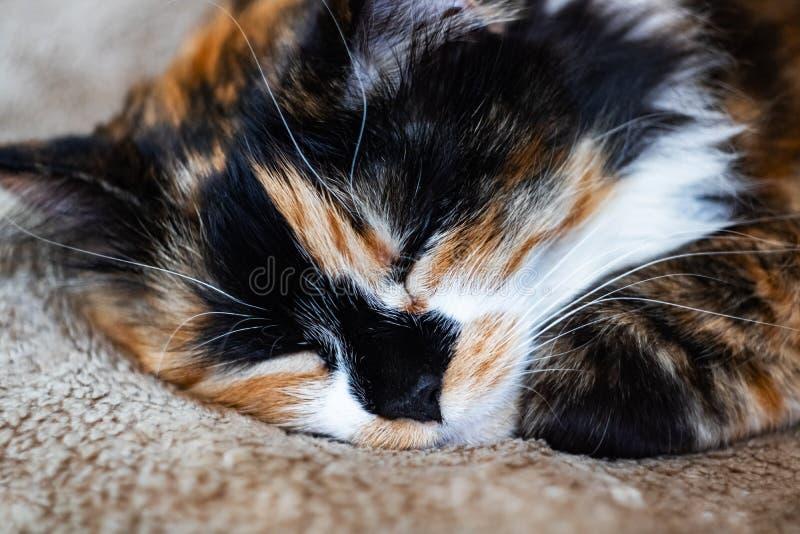 De zwarte witte rode kattenslaap, sluit omhoog portret stock afbeelding