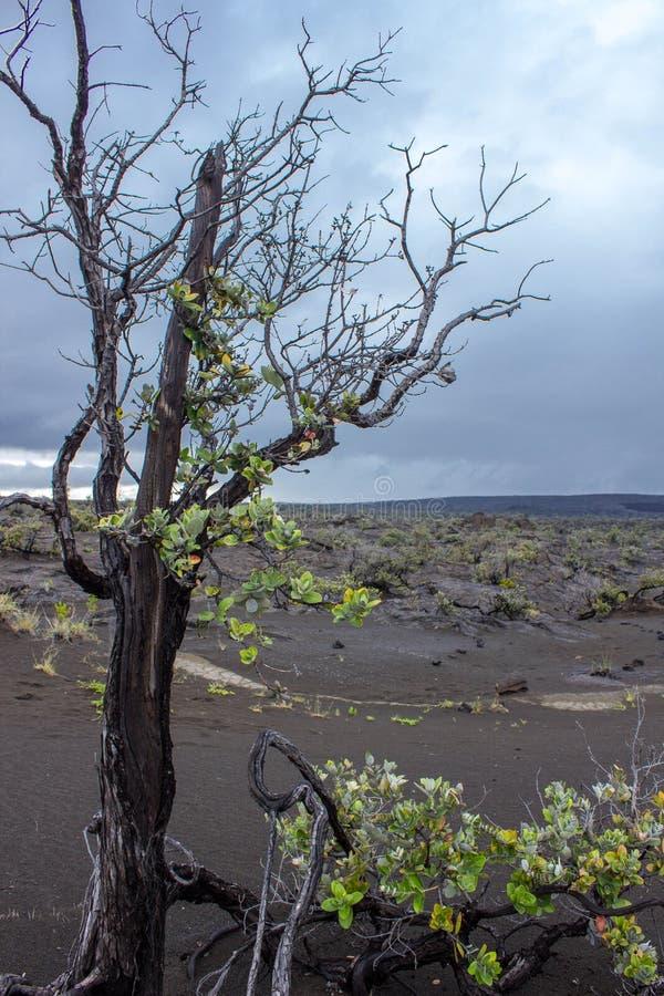 De zwarte Woestijn stock fotografie