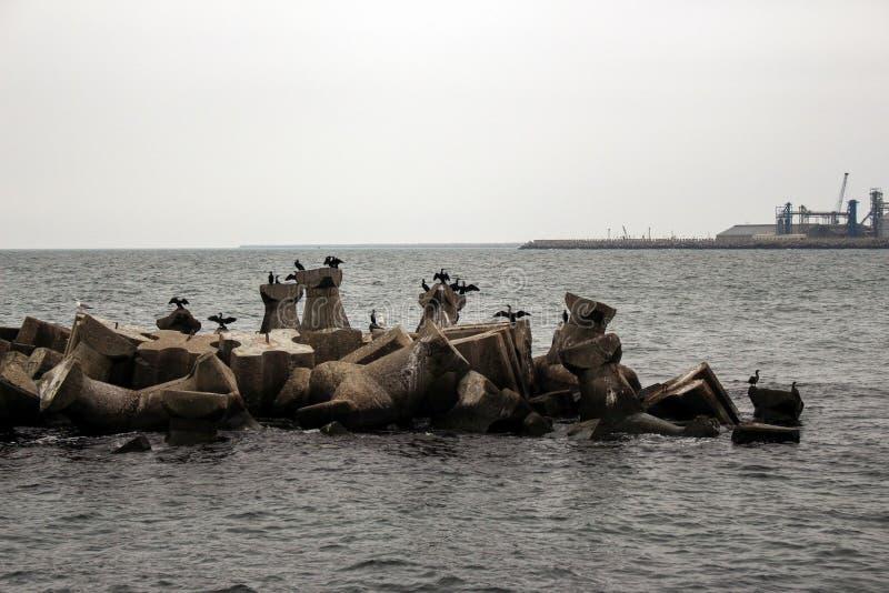 De Zwarte Zee en sommige aalscholvers stock fotografie