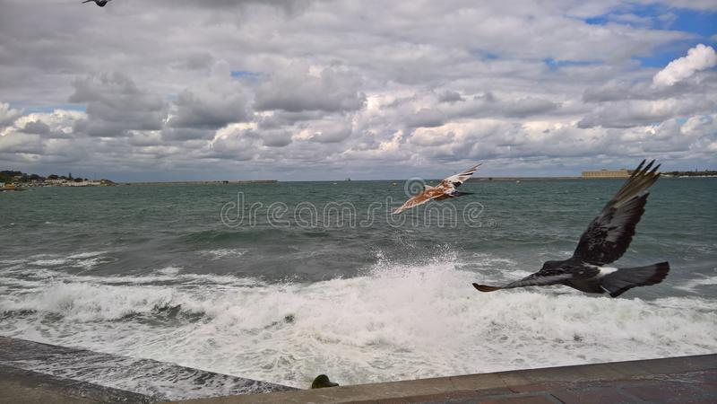 De Zwarte Zee in Sebastopol stock fotografie