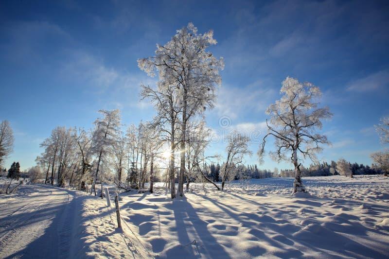De Zweedse winter royalty-vrije stock fotografie
