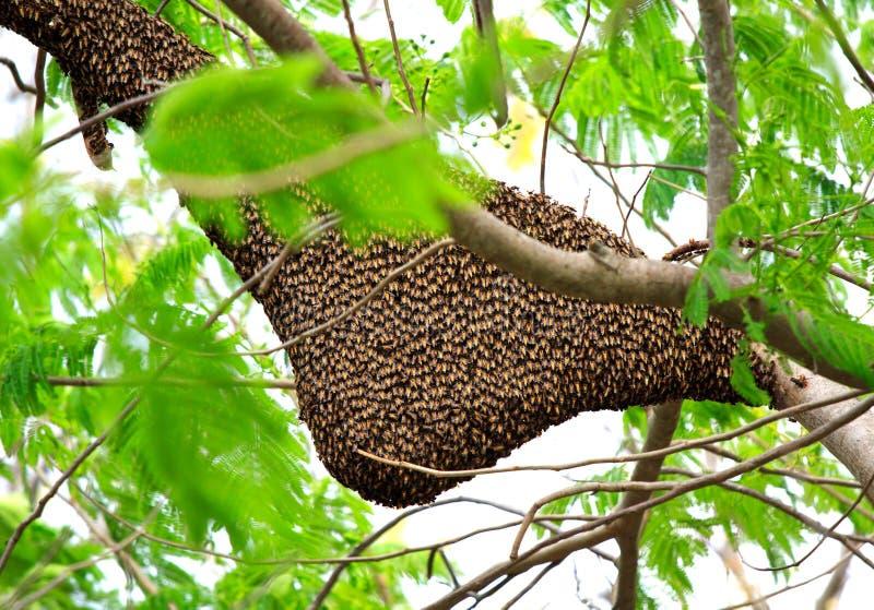 De Zwerm van de Bij van de honing stock afbeelding