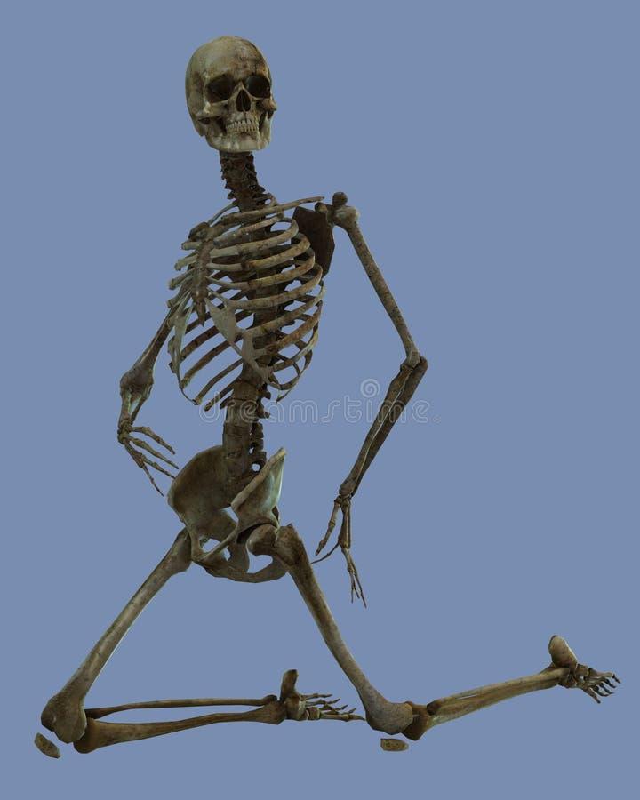 Download Dead stock illustration. Image of clavicle, night, skeletal - 25795143