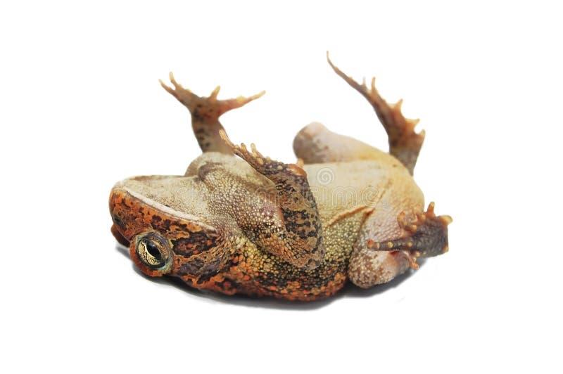 Download Dead stock photo. Image of legs, frogs, body, deceased - 9479232