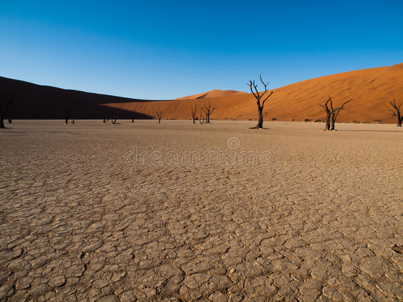 Download Dead Acacia Trees And Red Dunes Of Namib Desert Royalty Free Stock Images - Image: 35673509