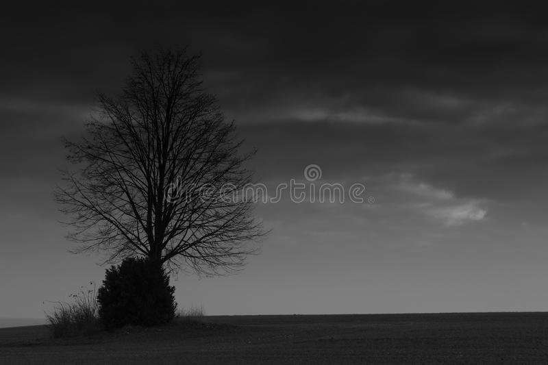 Eerie Dead Tree Black White Stock Images - Download 155 Photos