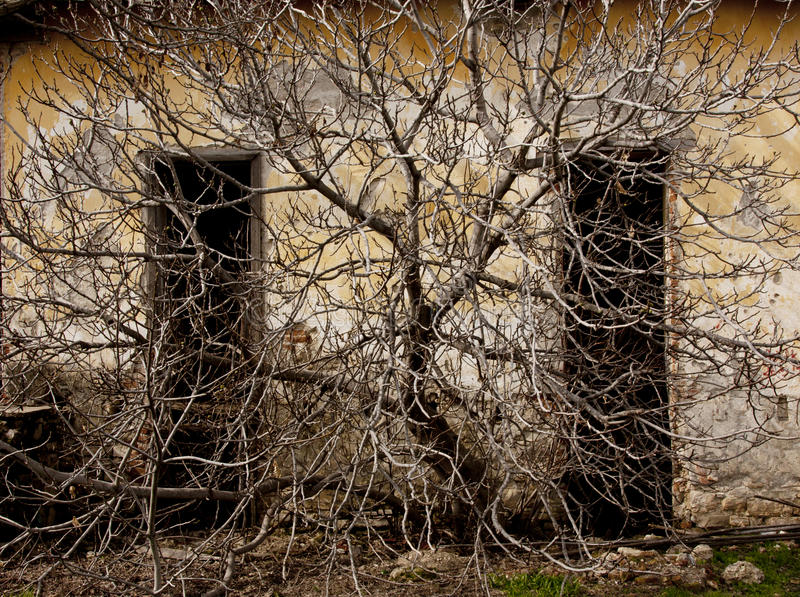 Dead branches royalty free stock images