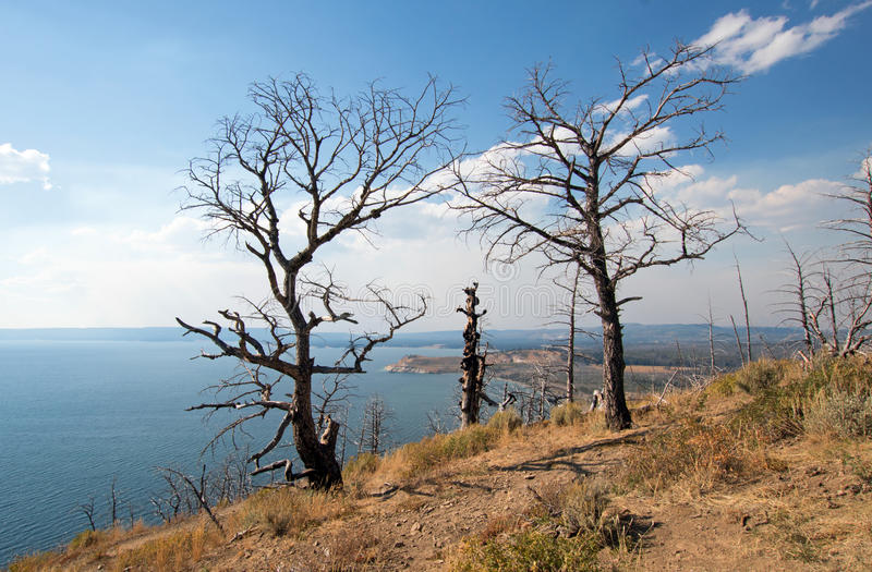 Dead burned trees at Lake Butte View above Yellowstone Lake in Yellowstone National Park in Wyoming. USA stock photography