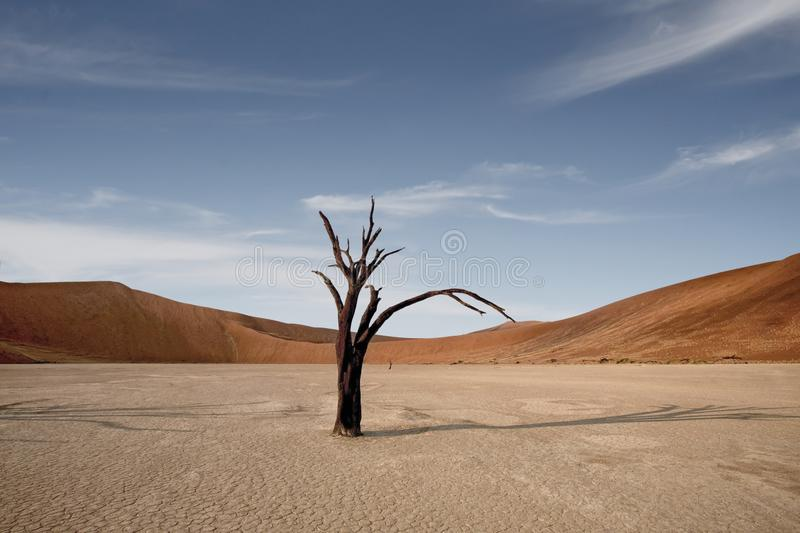 Dead Camelthorn Trees against red dunes and blue sky in Deadvlei, Sossusvlei. Namib-Naukluft National Park, Namibia, Africa stock photography