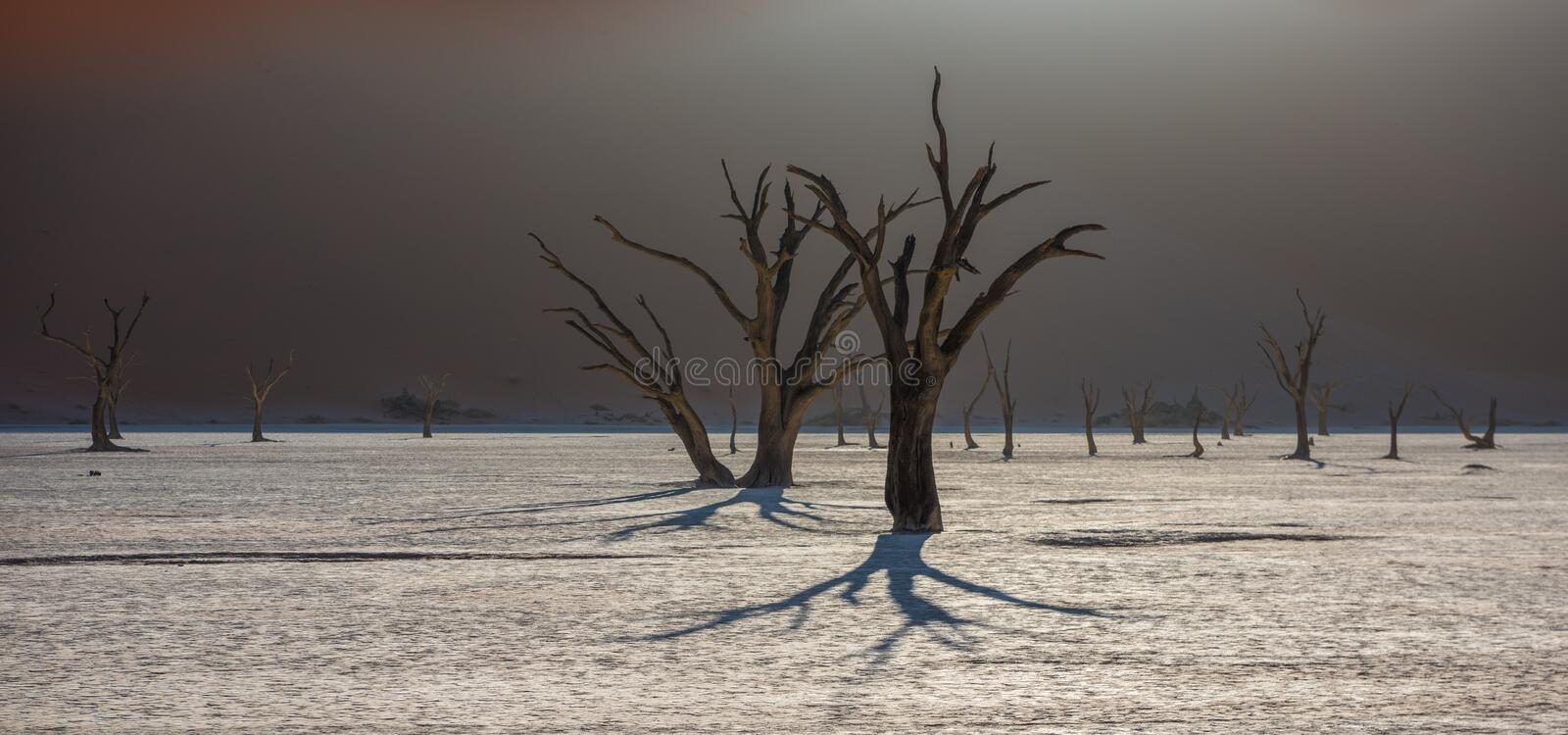 Dead Camelthorn Trees and red dunes in Deadvlei, Sossusvlei, Nam royalty free stock photography