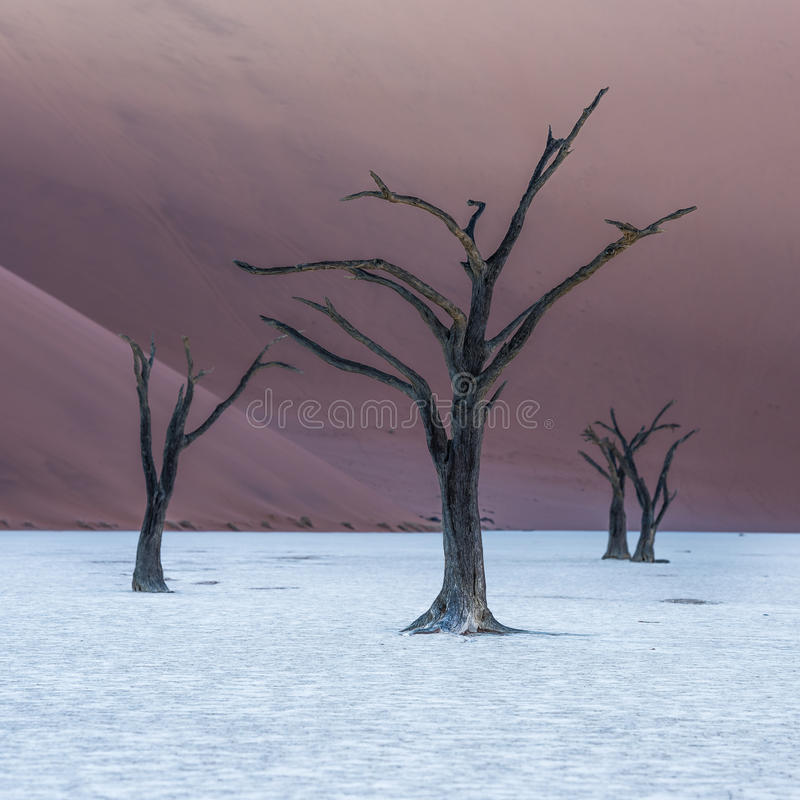Dead Camelthorn Trees and red dunes,Deadvlei, Sossusvlei, Namibia royalty free stock images
