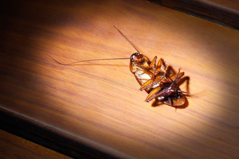 Dead cockroach stock photos