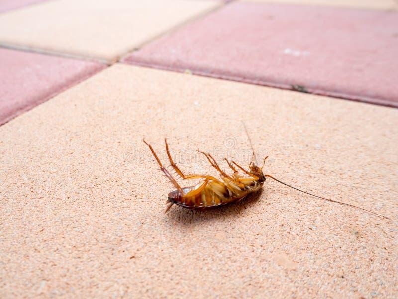 Dead cockroach on the floor in house. Dead cockroach on the floor royalty free stock photos