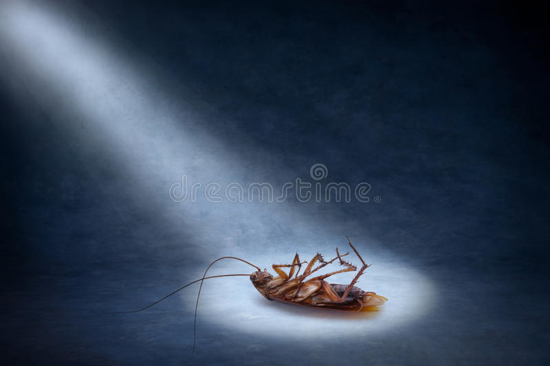 Dead Cockroach Insect Pest Control stock photos