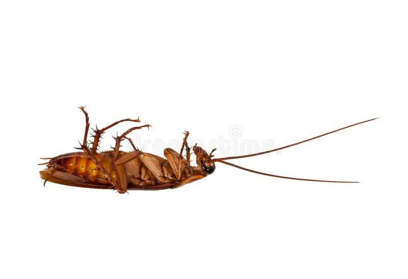 Dead cockroach royalty free stock photos