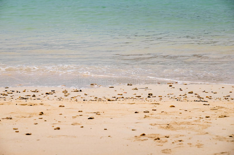 Dead Corals and Shells. On the beach of sea coast in south island of Thailand stock photography