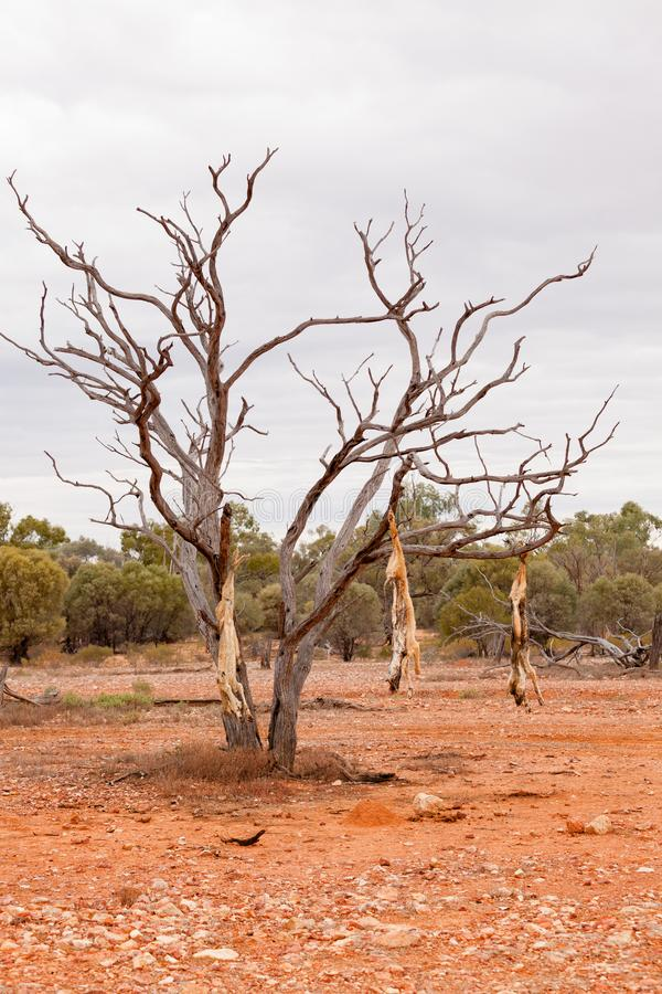 Dead dogs hanging in a dead tree royalty free stock photography