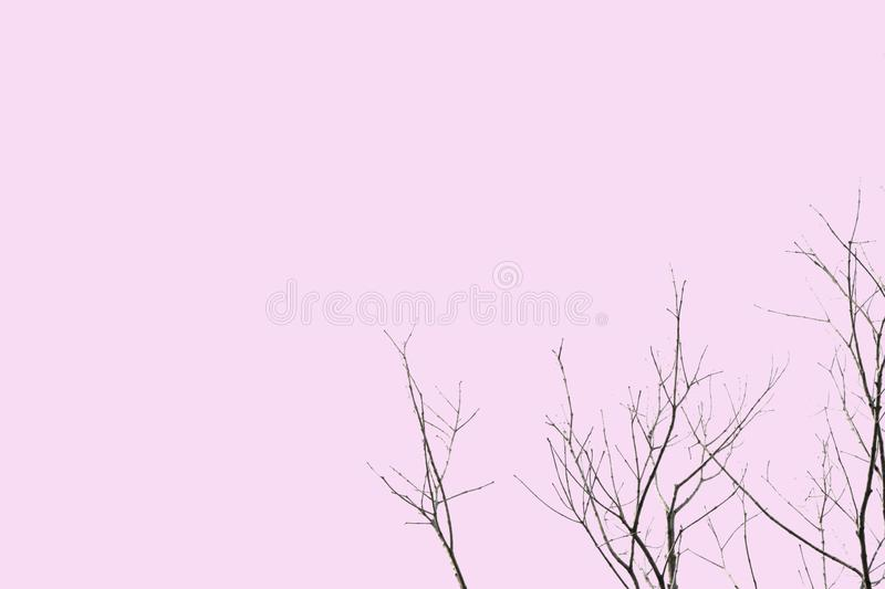 Dead and dry big tree . Art nature. black and white ,isolated on a pink background of file with Clipping Path .pastel color stock photos