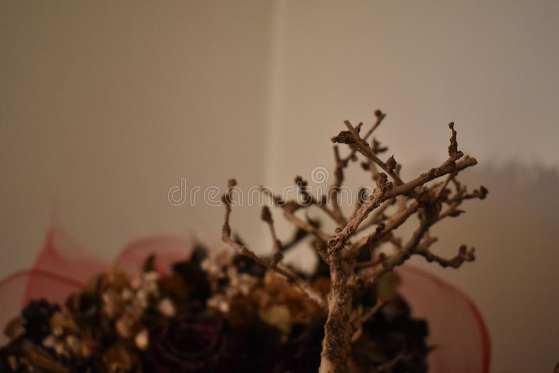 Dead dry Bonsai tree with dry flowers. In the background royalty free stock images