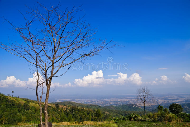 Download Dead dry tree stock image. Image of cloud, wild, sunny - 22086173