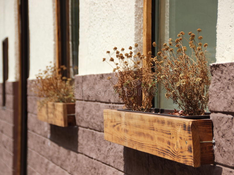 Dead Dry Withered Flowers in Window Box on Wall. Dead Dry Withered Flowers in Wooden Window Box on Wall royalty free stock image
